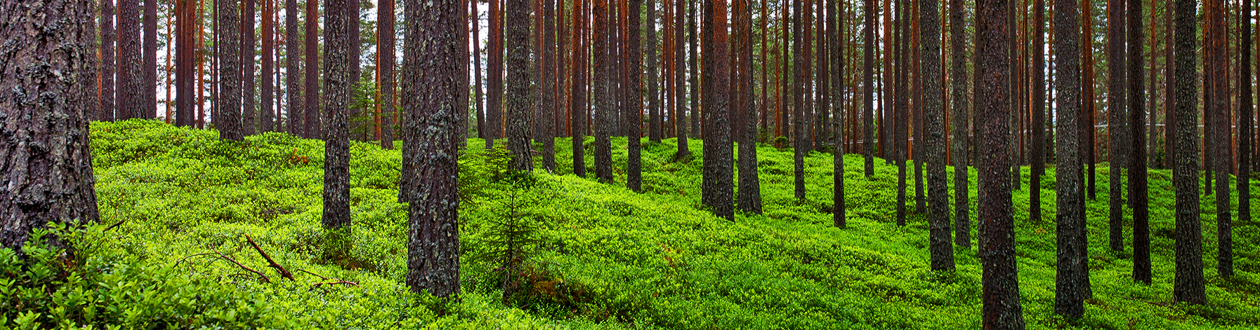 skog-1
